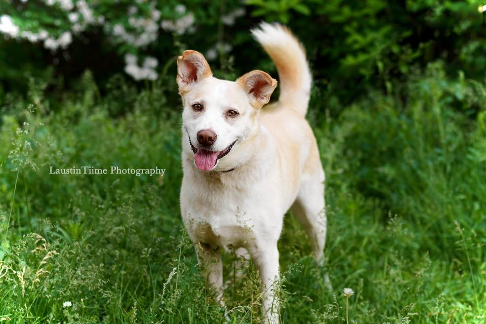 Finding Them Homes Dog Rescue